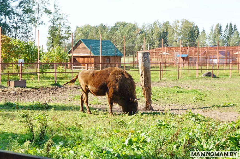 stankovo-centr-ekologicheskogo-turizma_30